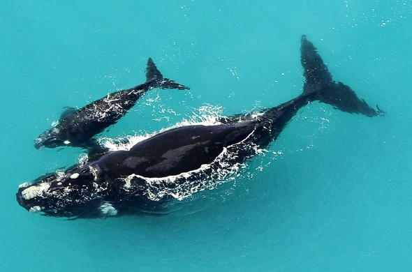 The De Hoop Trail offers amazing whale watching.
