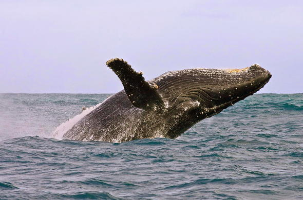 See whales at the Hermanus Whale Festival.